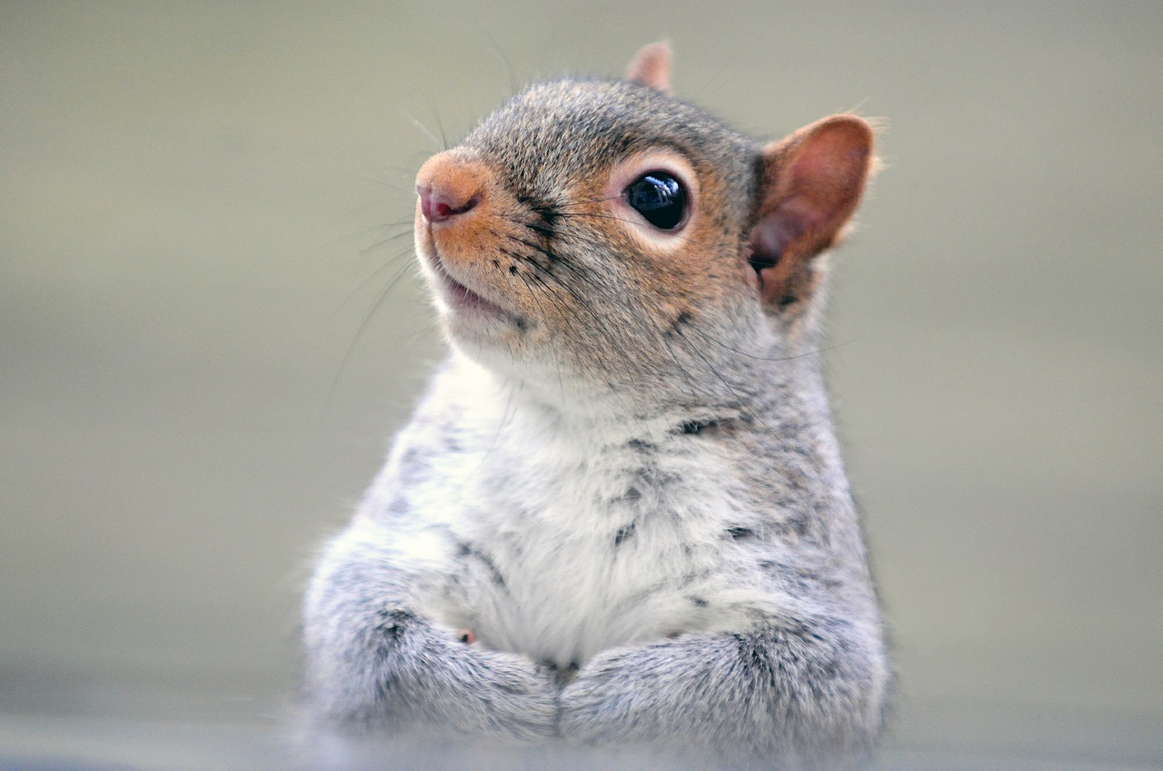 squirrel-612369 1280